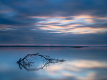 Branch Of Old Tree In The Lake Under Dramatic Sky