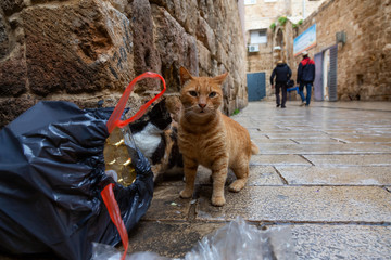 Street cats in the Old City of Akko. Taken in Acre, Israel.