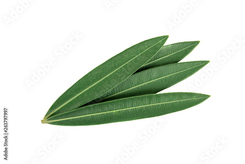 Fototapeta Green leaves on white background obraz na płótnie