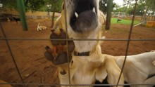 Excited Dogs At Dog Shelter Jumping On Fence And Smelling Camera, Fogging Up Lens On A Bright Day