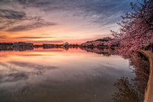 Sunrise Over The Tidal Basin Cherry Blossoms