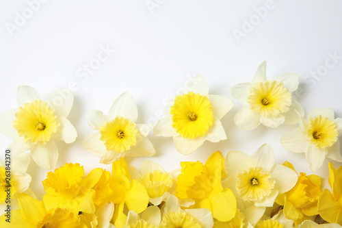 Keuken foto achterwand Narcis Composition with daffodils on white background, top view. Fresh spring flowers