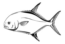Permit Fish In Side Viewin Black And White Colors, Recreational Fishing, Sport Fishing