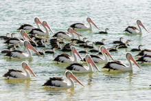 Beautiful Birds With Long Beak...