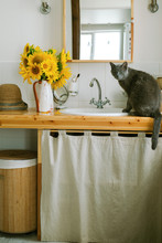 Bouquet Of Sunflowers And Cat On The Table In The Bathroom