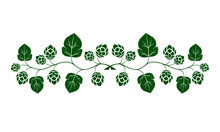 Vector Illustration. Green Outline (contour) Of Crossed Hop Branches With Leaves Isolated On White Background. Decorative Design Element For Beer Menu As Border For Text Divider And Page Decoration.