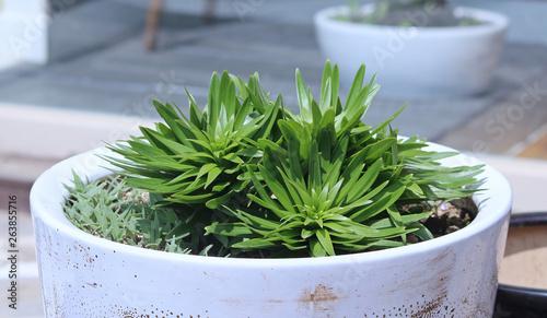 Fotografie, Obraz  화분에 화초