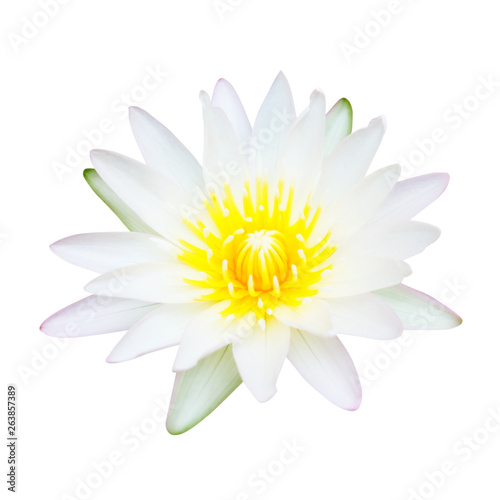 Nénuphars Water Lily or Lotus Flower Isolated on White Background.