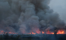 Extensive Forest Fire With Hea...