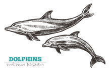 Hand Drawn Vector Dolphins. Sk...
