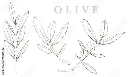 Fotografia  Olivenzweig Illustration auf weißem Hintergrund