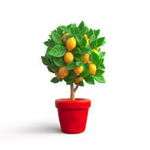 Small Lemon Tree In A Pot. Sty...