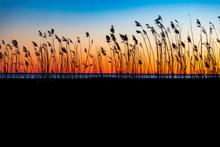 Sunset Through Reeds At The Se...