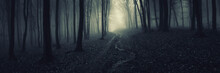 Dark Forest Panorama, Path In ...