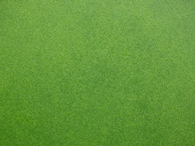 Green Duckweed On Water