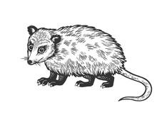Opossum Animal Sketch Engravin...