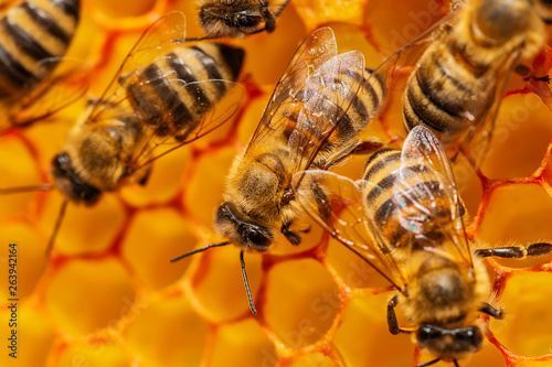 Recess Fitting Bee A bunch of bees on a honeycomb