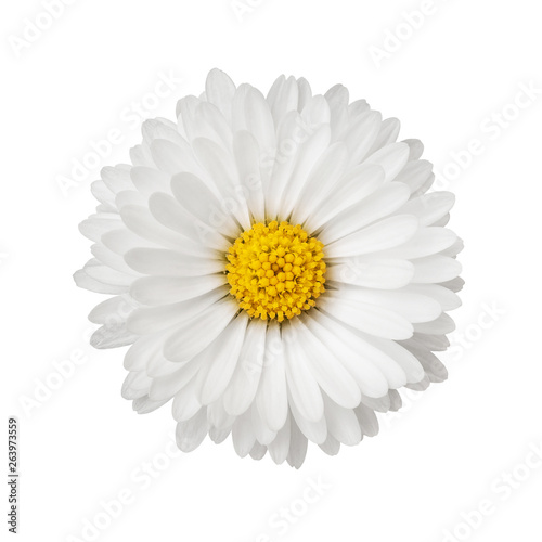 Deurstickers Madeliefjes Close up of daisy flower isolated on white background