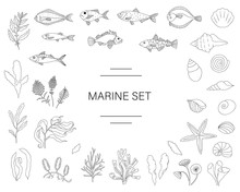 Vector  Black And White Set Of Fish, Sea Shells, Seaweeds Isolated On White Background. Colorful Marine Collection. Underwater Illustration
