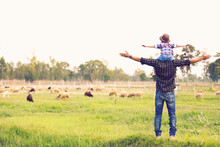 The Son Rides His Father Neck And Looks Out At The Family Sheep Happily..