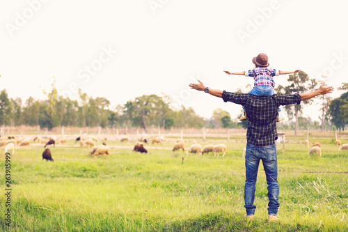 Fototapeta The son rides his father neck and looks out at the family sheep happily.. obraz