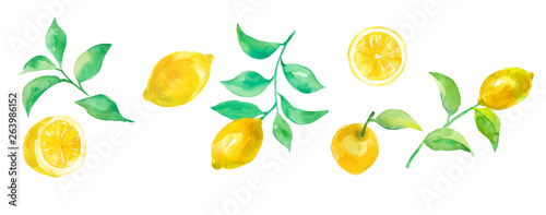 Fototapeta  レモンパーツ各種 水彩イラスト