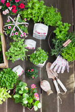 Planting Herbs And Flowers In ...