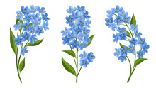 Forget Me Not Flower In Different Position, With Blue Petals And Green Leaf. Vector Illustration Isolated On White, For Summer And Nature Design