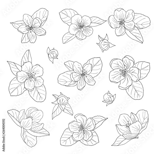 Poster Floral black and white Hand-drawn apple blossom, coloring page