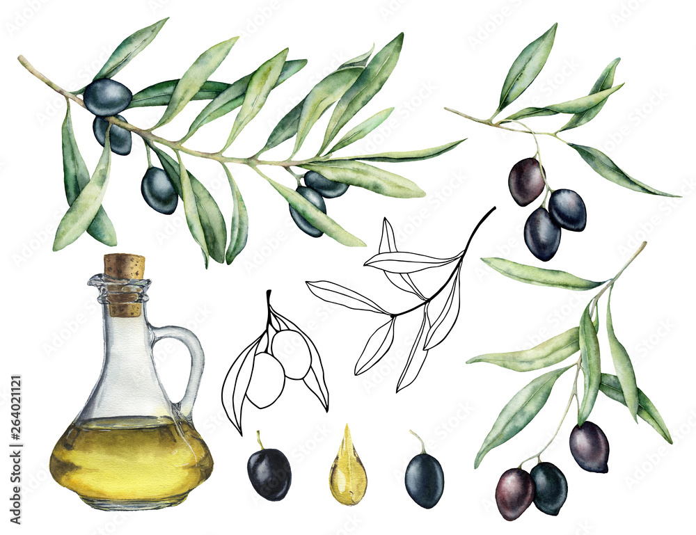 Fototapety, obrazy: Watercolor and sketch set with olive, branch and bottle with oil. Hand painted illustration with olive berries and tree branches with leaves isolated on white background. For design, print and fabric.