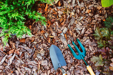 natural mulch on garden bed from pine bark pieces, with garden tools and juniperus (conifer) planted. Protecting conifers, seasonal garden work