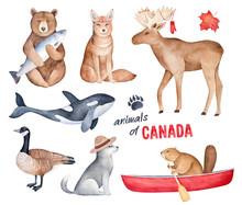 """""""Animals Of Canada"""" Watercolor..."""