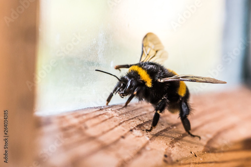 Foto bumblebee on the window