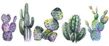 Set Of Green Cactus Plants. Watercolor Illustration On White Background. Isolated Elements For Design.