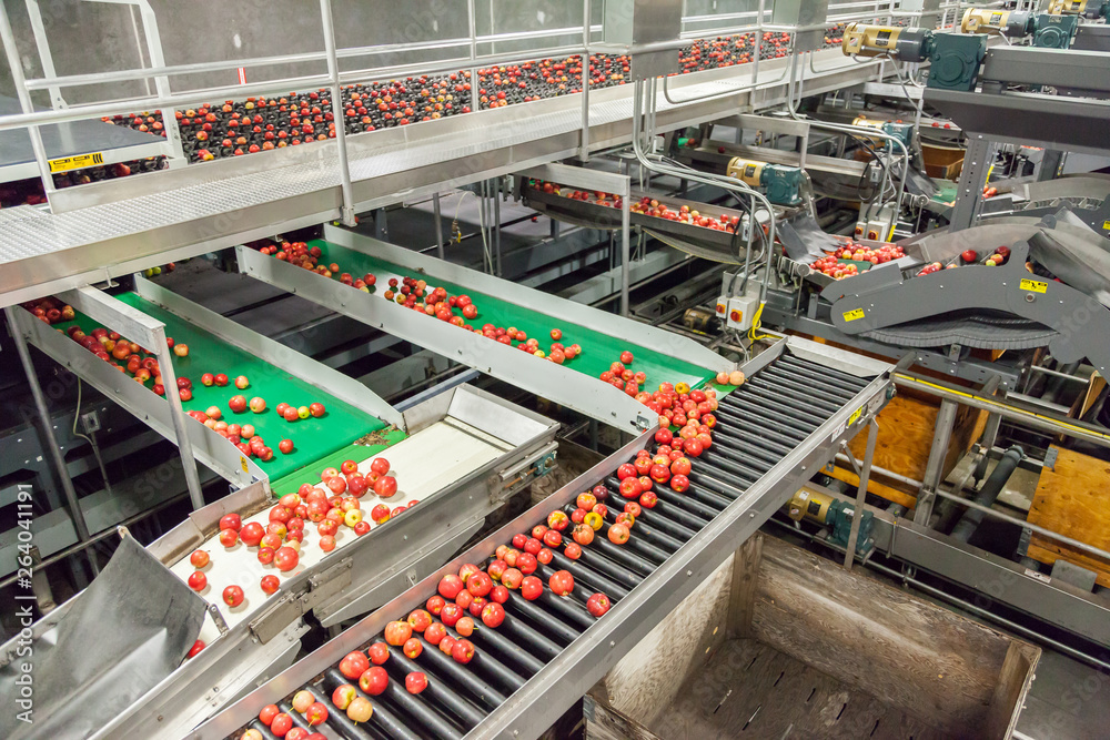 Fototapety, obrazy: Clean and fresh gala apples on a conveyor belt in a fruit packaging warehouse