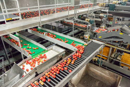 Clean and fresh gala apples on a conveyor belt in a fruit packaging warehouse - 264041191