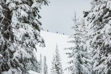 Three Skiers Skin Uphill In The Distant Wyoming Backcountry Winter