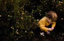 Little Girl Playing With Flowers In A Yellow Flower Bush