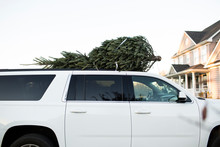 Freshly Cut Christmas Tree On Top Of A White SUV
