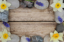 Weathered Wood Background With Frame Of River Rocks, Daffodils, And Grape Hyacinth Flowers.