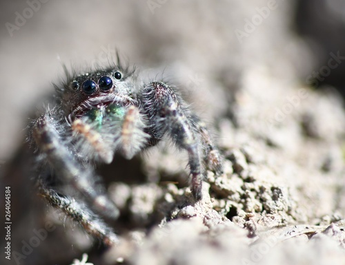 Photo Bold Jumper