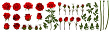 Rose Flower Set Of Blooming Pl...