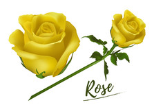Collection  Realistic  Rose  Isolated On White Background