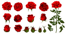 Rose Flower Set Of Blooming Plant. Garden Rose Isolated Icon Of Red Blossom, Petal And Bud With Green Stem And Leaf For Romantic Floral Decoration, Wedding Bouquet And Valentine Greeting Card