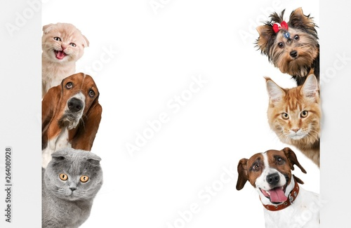 Fotografie, Tablou Various cats and dogs as frame isolated on white