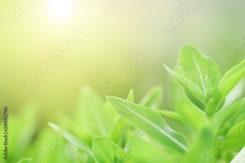 Montage in der Fensternische Lime grun Blur image of green watercress leafs in garden with natural sun lights. For use with nature, organic, gardening landscape topics or background wallpaper. Large copy space area