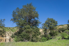 Trees In Rocky Grass Canyon
