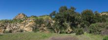 Oak Trees Grow In Long Valley