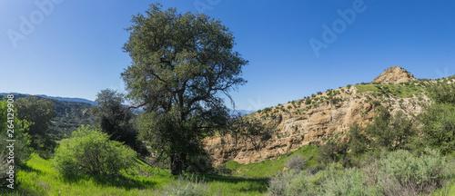 Fotografia, Obraz  Tall Oak Tree in Rocky Canyon