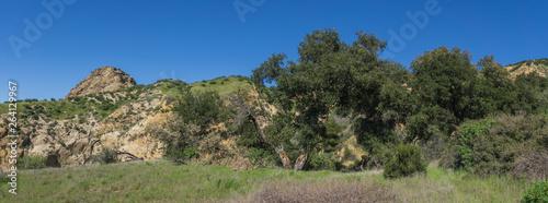 Fotografia, Obraz  Oak Trees Grow in Long Valley